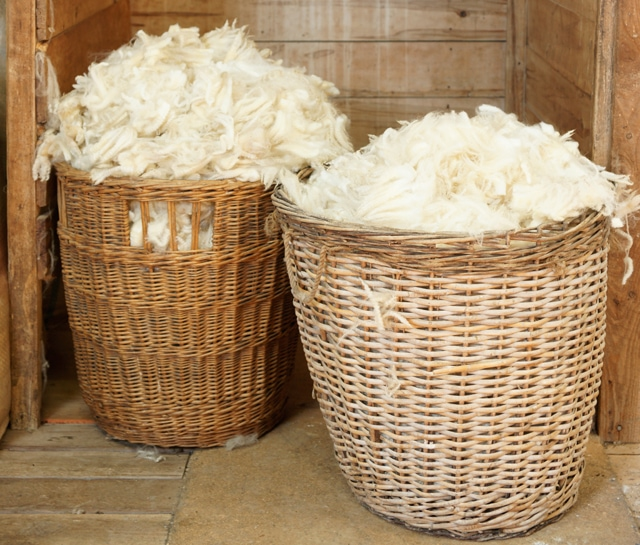 Wool before it's spun
