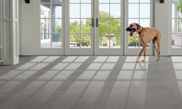 Stainmaster Solarmax Carpet